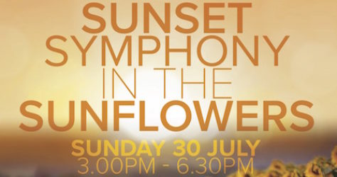 Sunset Symphony in the Sunflowers jpg copy 2